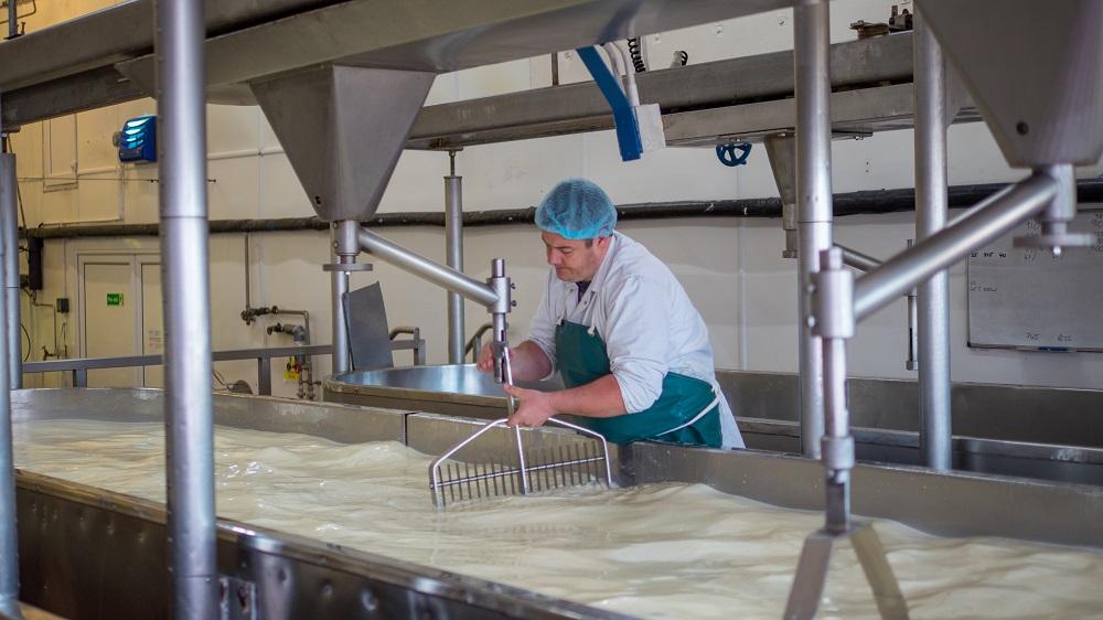 Travailleur d'une usine de fromage en train d'ajuster la machine.